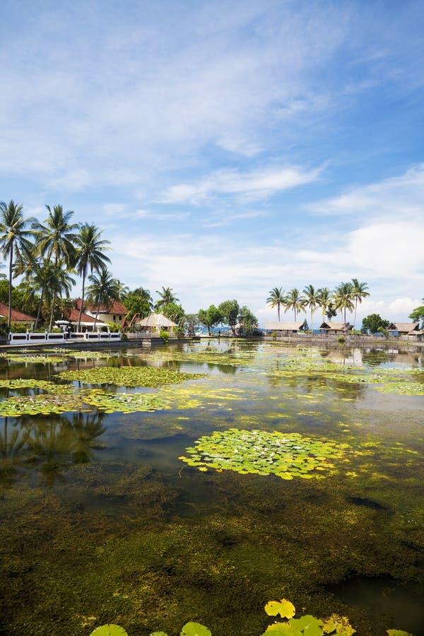 Campo en Candidasa, Bali, Indonesia imagen de archivo libre de regalías