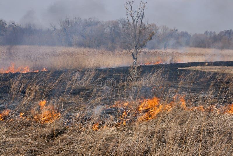 Campo en el fuego imagen de archivo libre de regalías