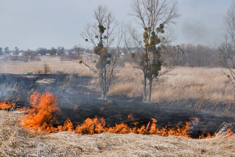 Campo en el fuego imagen de archivo