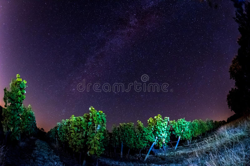Campo en la noche, Burdeos Wineyard de la uva imágenes de archivo libres de regalías