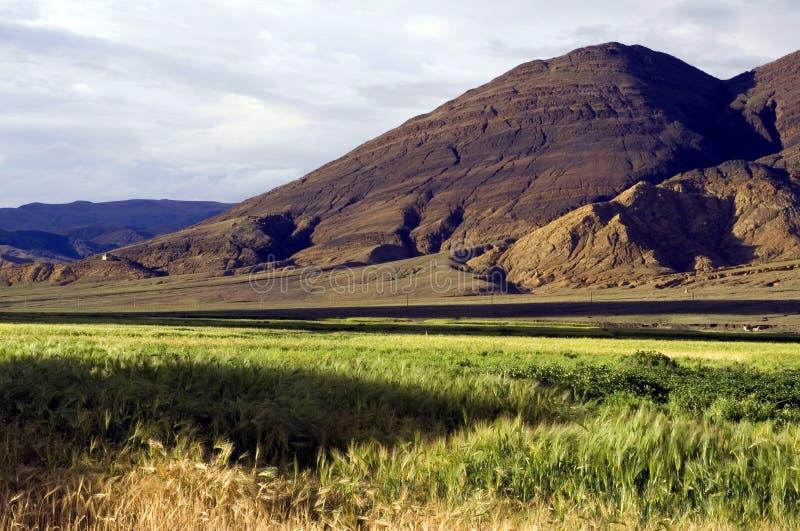 Campo en las montañas fotografía de archivo libre de regalías