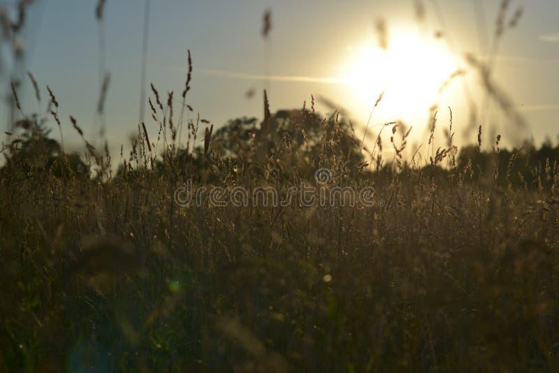 Campo en los resplandores de la puesta del sol de los rayos foto de archivo