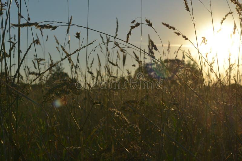 Campo en los resplandores de la puesta del sol de los rayos imagenes de archivo