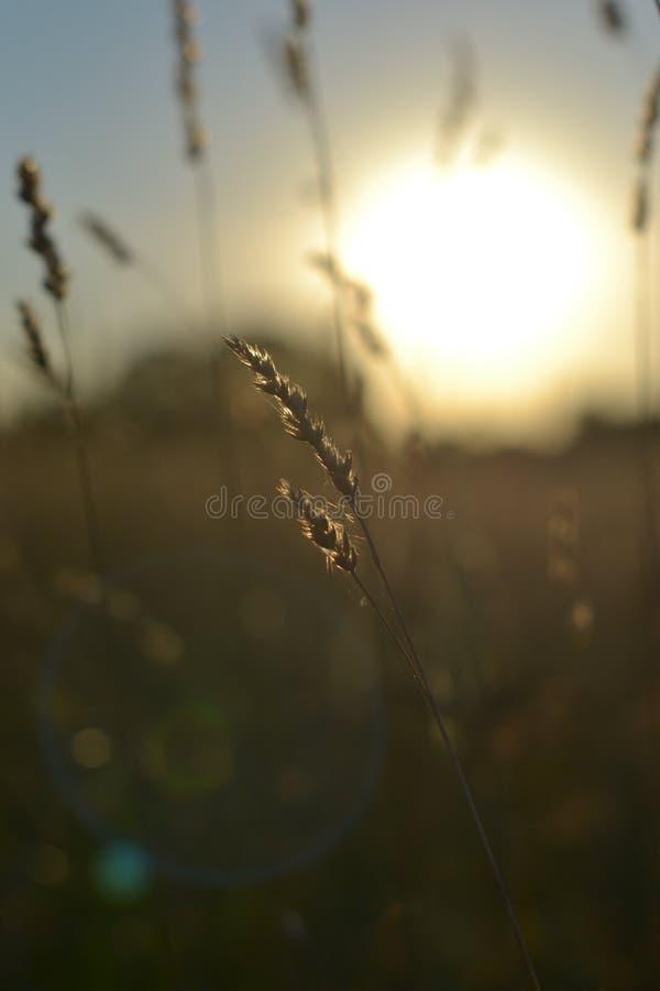 Campo en los resplandores de la puesta del sol de los rayos fotos de archivo libres de regalías