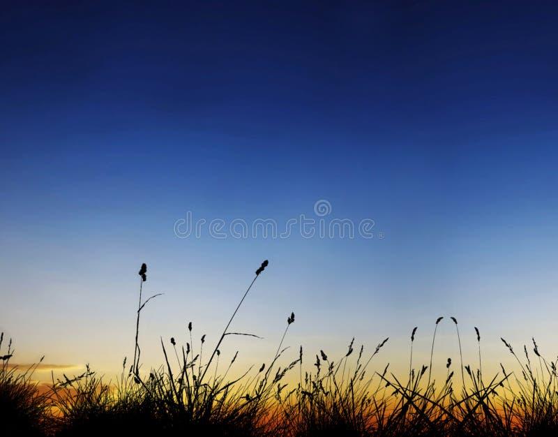 Campo en puesta del sol fotos de archivo libres de regalías