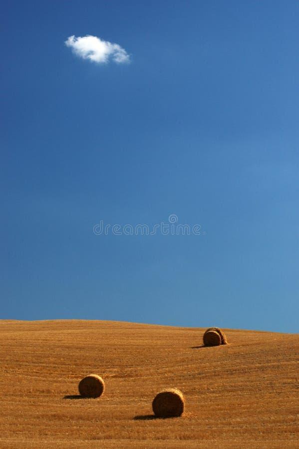 Campo en Toscana   fotos de archivo