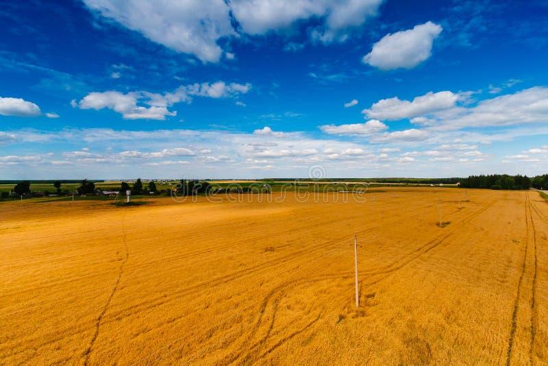 Campo enorme di grano e di cielo blu qui sopra nella campagna immagine stock