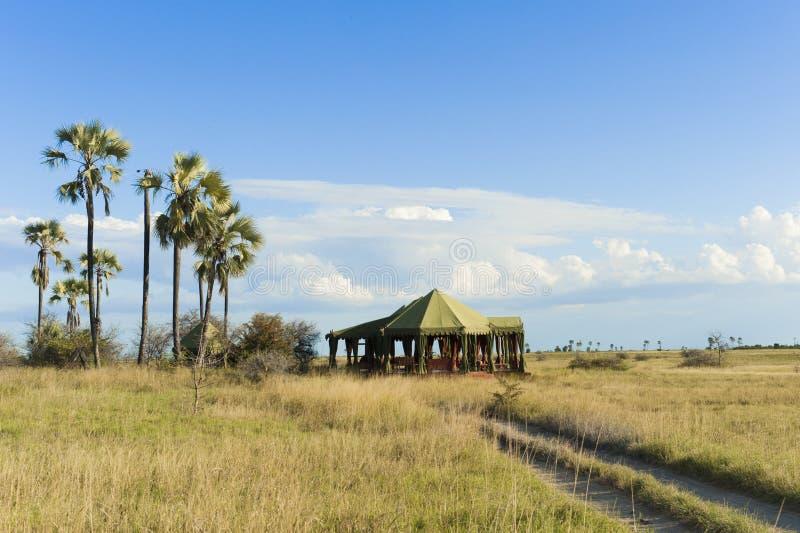 Campo entoldado en Botswana, África fotografía de archivo