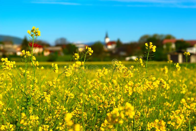 Campo esloveno en primavera imagen de archivo