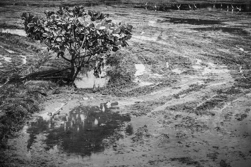 Campo fangoso fotografie stock libere da diritti