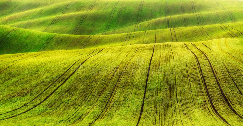Campo filas de cosechas agrícolas brotadas campo montañoso pintoresco Campo agrícola en resorte imagen de archivo libre de regalías