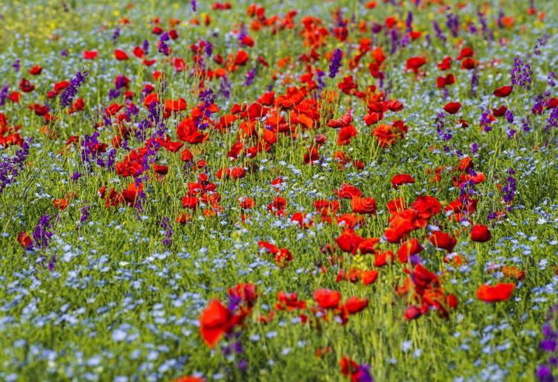 Campo floreciente brillante hermoso fotos de archivo