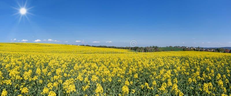 Campo floreciente de la rabina en el paisaje montañoso - panorama imagen de archivo libre de regalías