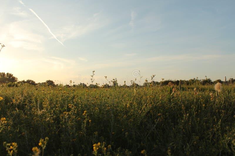 Campo floreciente Tierra mezclada Campo en la puesta del sol Puesta del sol del verano Naturaleza fotos de archivo