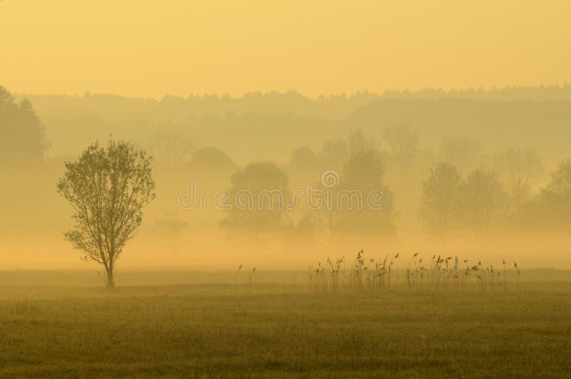 Campo in foschia di mattina fotografie stock libere da diritti