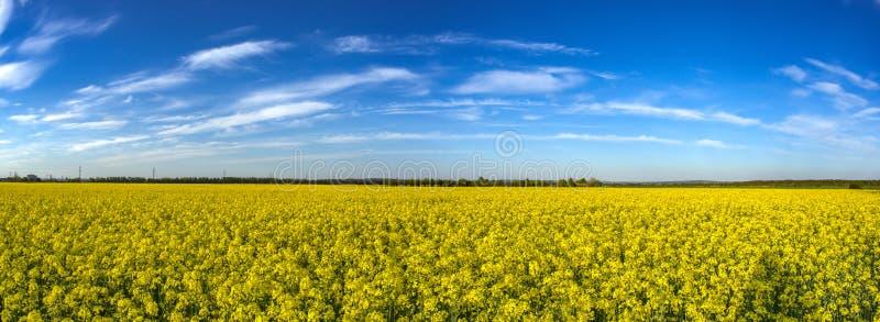 Campo giallo con canola di fioritura fotografia stock libera da diritti