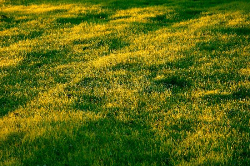 Download Campo gramíneo foto de stock. Imagem de verão, amarelo, fundo - 50654