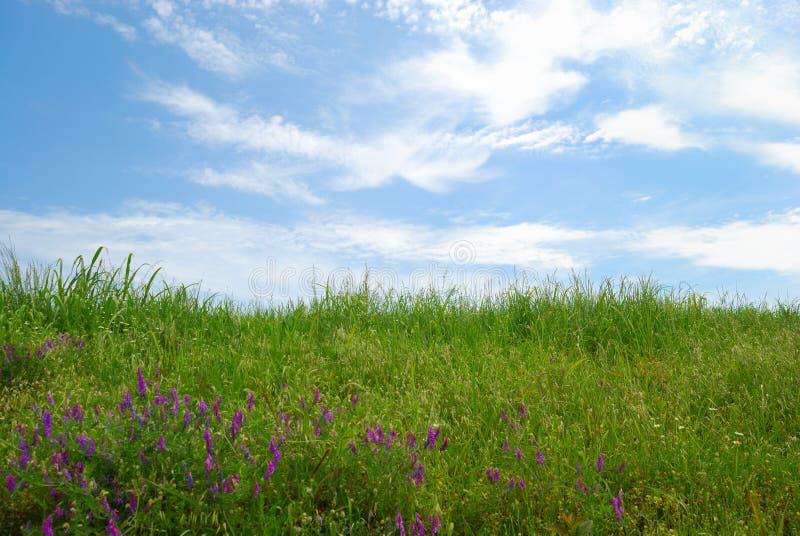 Campo gramíneo com céu nebuloso e grama verde fotografia de stock royalty free