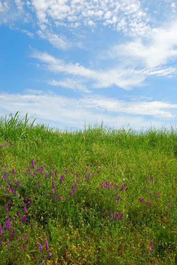 Campo gramíneo com céu nebuloso e grama verde fotos de stock