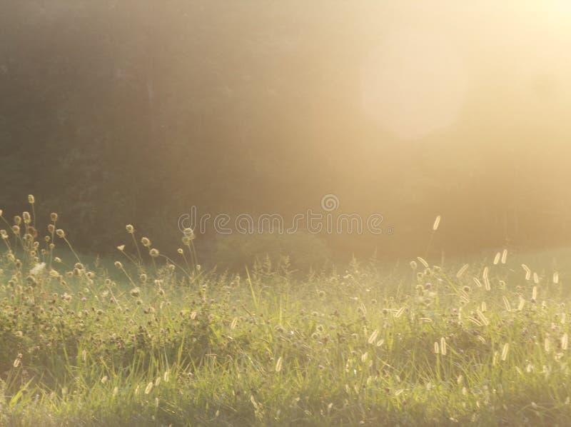 Campo gramíneo no crepúsculo fotografia de stock royalty free