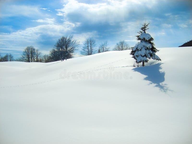 Campo granangular de la visión de la nieve con el solos árbol y pasos de pino imágenes de archivo libres de regalías