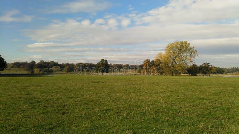 Campo grande con los árboles en la distancia imágenes de archivo libres de regalías