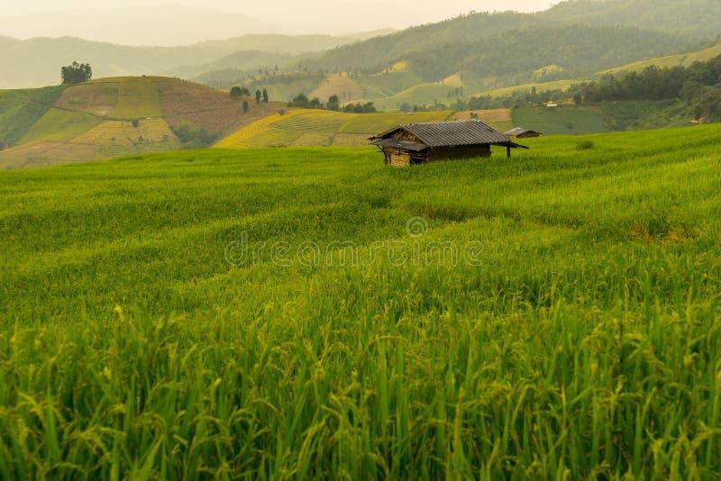 Campo Greeny do terraço do arroz fotografia de stock royalty free