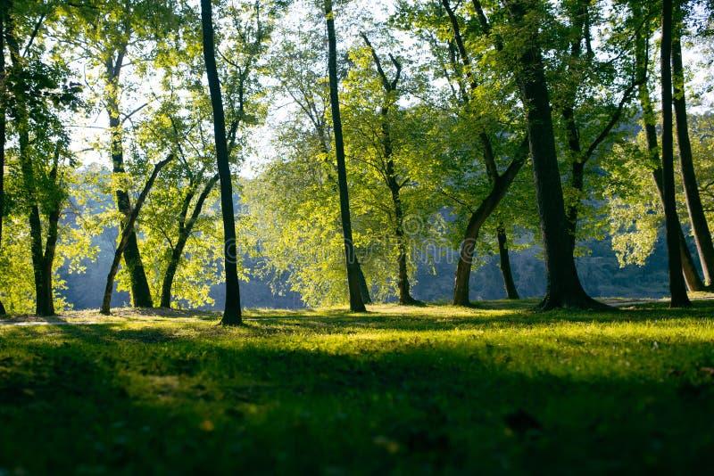 Campo herboso entre stees fotografía de archivo