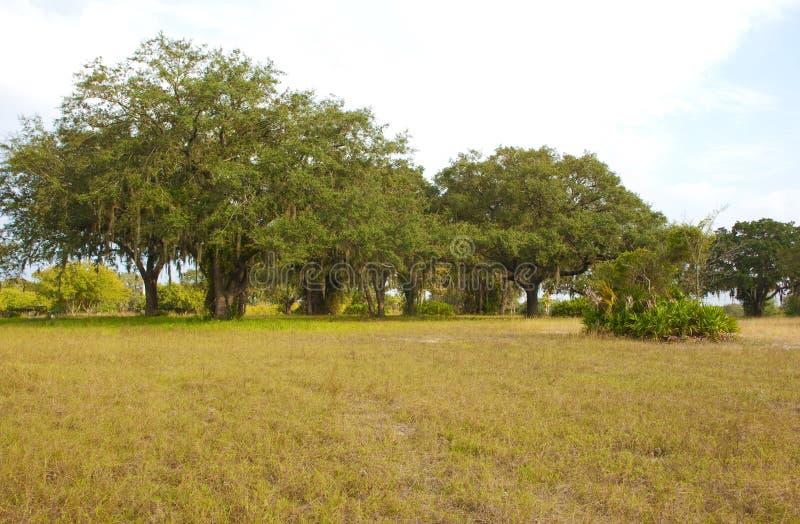 Campo herboso espacioso con los árboles en el borde imagenes de archivo