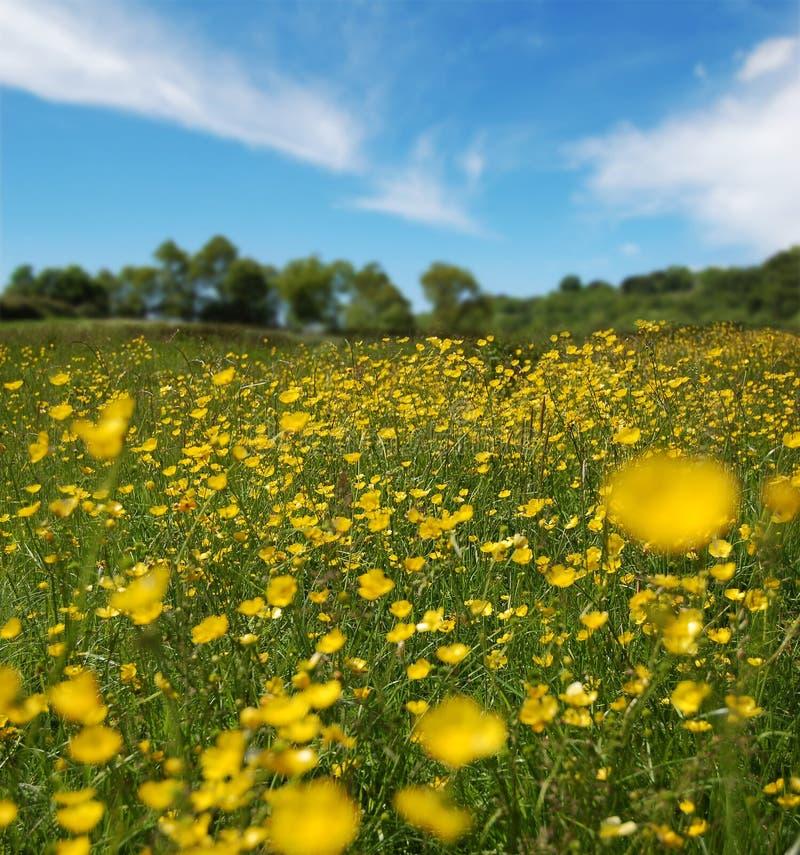 Campo hermoso del verano imágenes de archivo libres de regalías