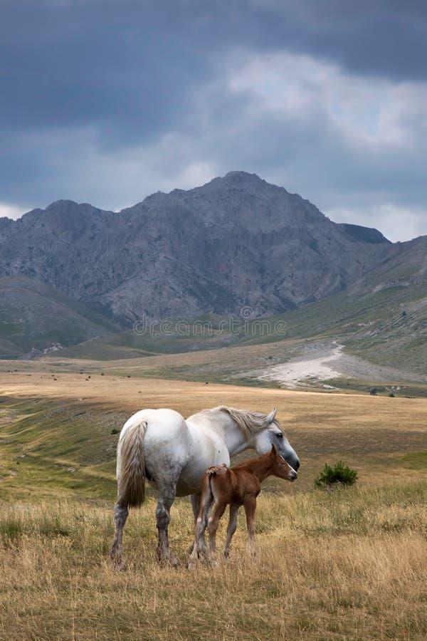 Campo Imperatore wilderness, Abruzzo, Italy stock images