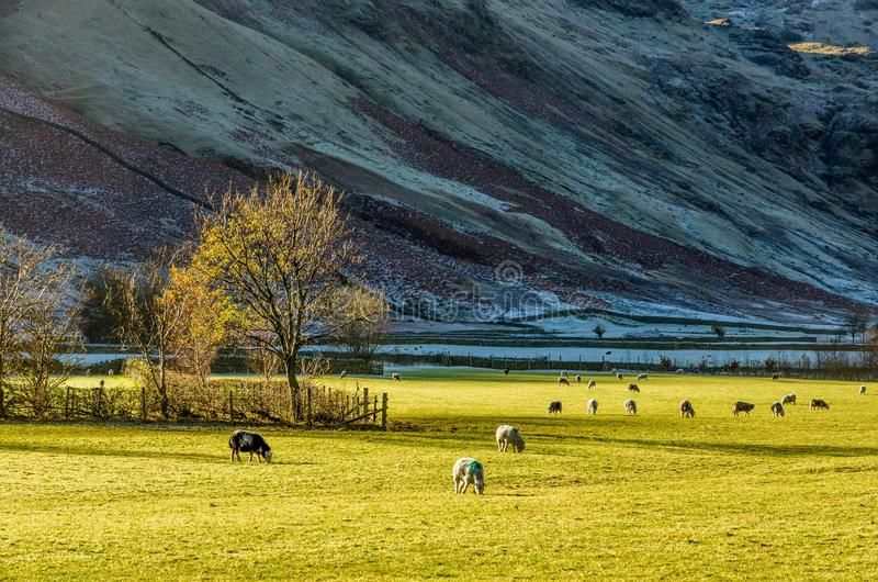 Campo inglés del distrito del lago cerca de Langdale, Reino Unido foto de archivo