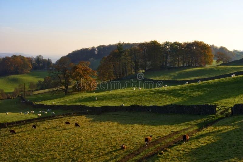 Campo inglés rodante en otoño imagenes de archivo