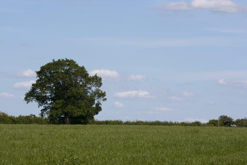 Campo inglés, verde de Holmer, Buckinghamshire imagen de archivo