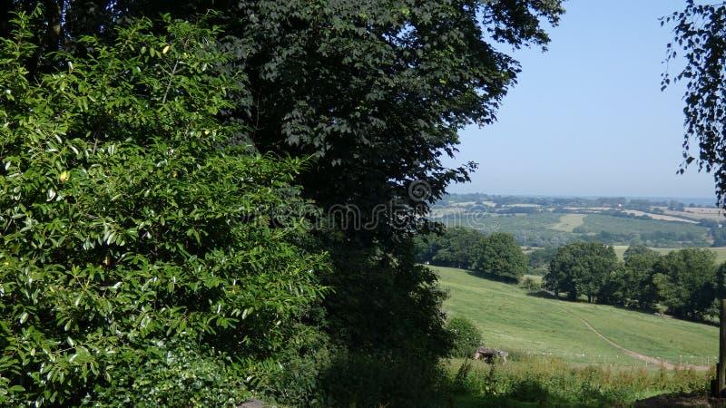 Campo inglês visto completamente o embaçamento de uma árvore de vidoeiro 4 imagem de stock royalty free