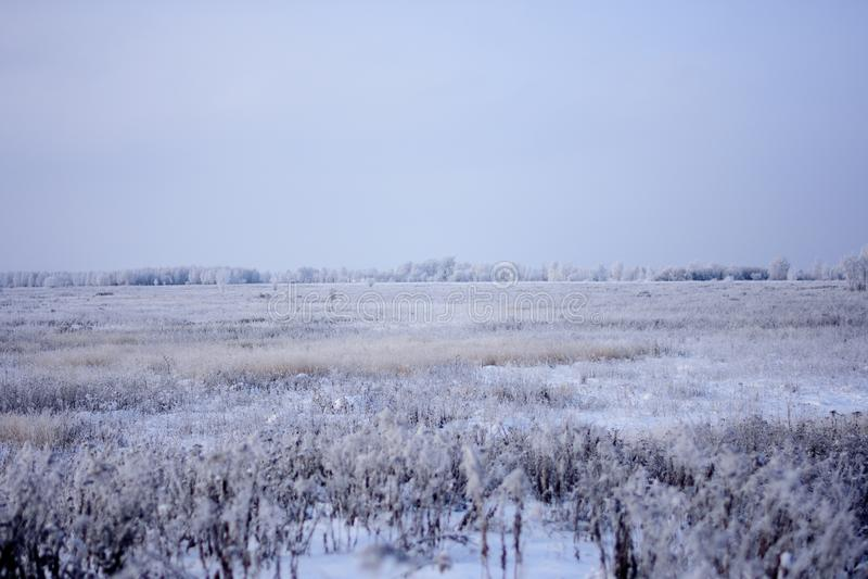 Campo innevato con gli arbusti e gli alberi nella distanza immagini stock libere da diritti