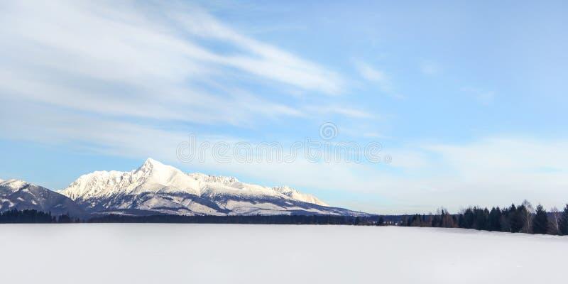 Campo innevato con il simbolo slovacco di Krivan del supporto nella distanza Ampio panorama di inverno con spazio per testo immagini stock libere da diritti