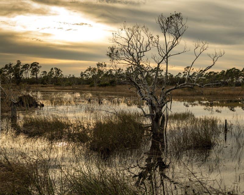 Campo inundado estéril solitario fotografía de archivo