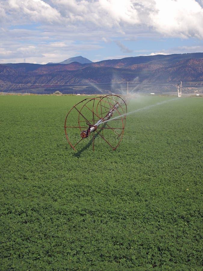 Download Campo irrigado imagem de stock. Imagem de agricultura - 26514465