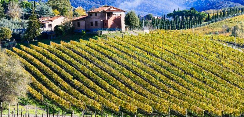 Campo italiano ilustrado con los viñedos Región de Toscana fotografía de archivo