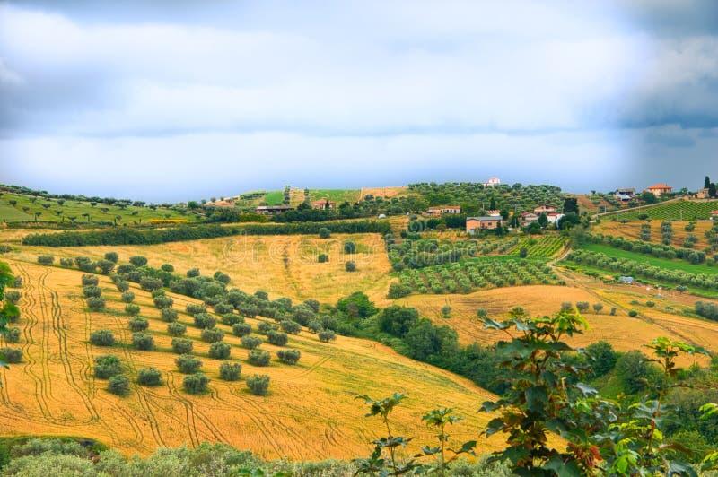 Campo italiano no verão fotografia de stock royalty free