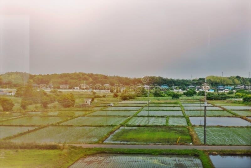 Campo japon?s del arroz imagenes de archivo