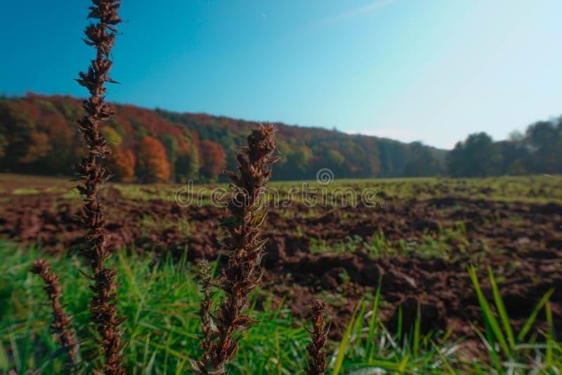 Campo labrado en otoño con las plantas y la hierba en el primero plano foto de archivo