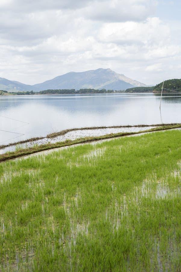 Campo, lago e monte do arroz em Pleiku imagens de stock royalty free