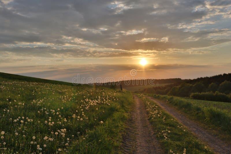Campo largo do dente-de-leão perto da estrada do por do sol fotografia de stock royalty free
