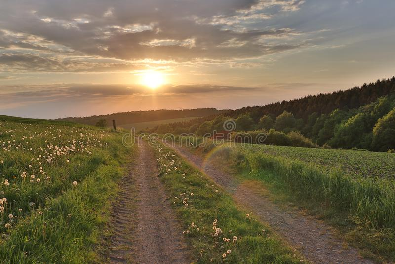 Campo largo do dente-de-leão perto da estrada do por do sol imagens de stock