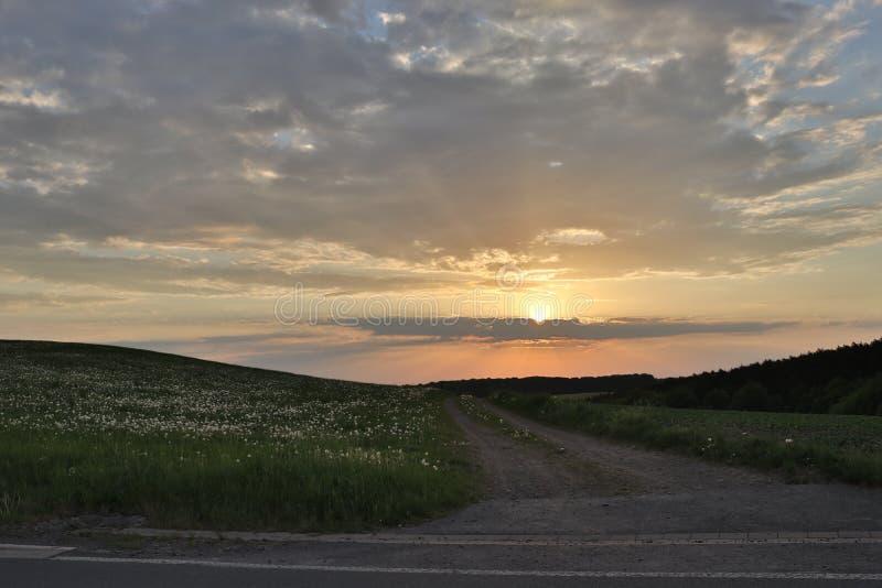 Campo largo do dente-de-leão perto da estrada do por do sol foto de stock royalty free
