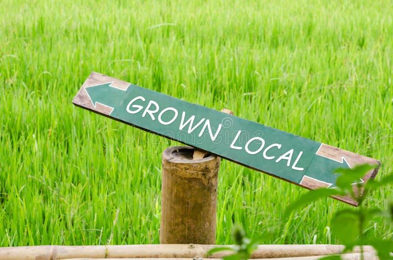 Campo local crecido del arroz fotos de archivo libres de regalías