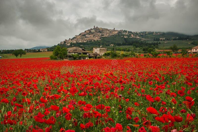 Campo maravilhoso de papoilas vermelhas no Trevi, Úmbria imagem de stock royalty free
