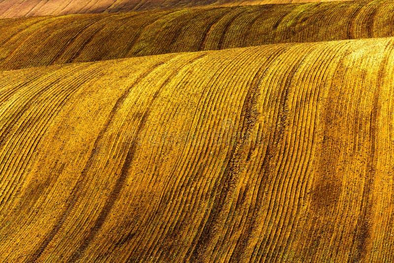 Campo marrone ondulato con i solchi profondi lungo  fotografia stock